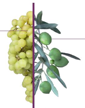 oliva-vid-fondoblanco